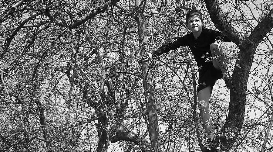 Проигравший в фанты выполнил задание — залез на дерево ©Фото с сайта pikist.com