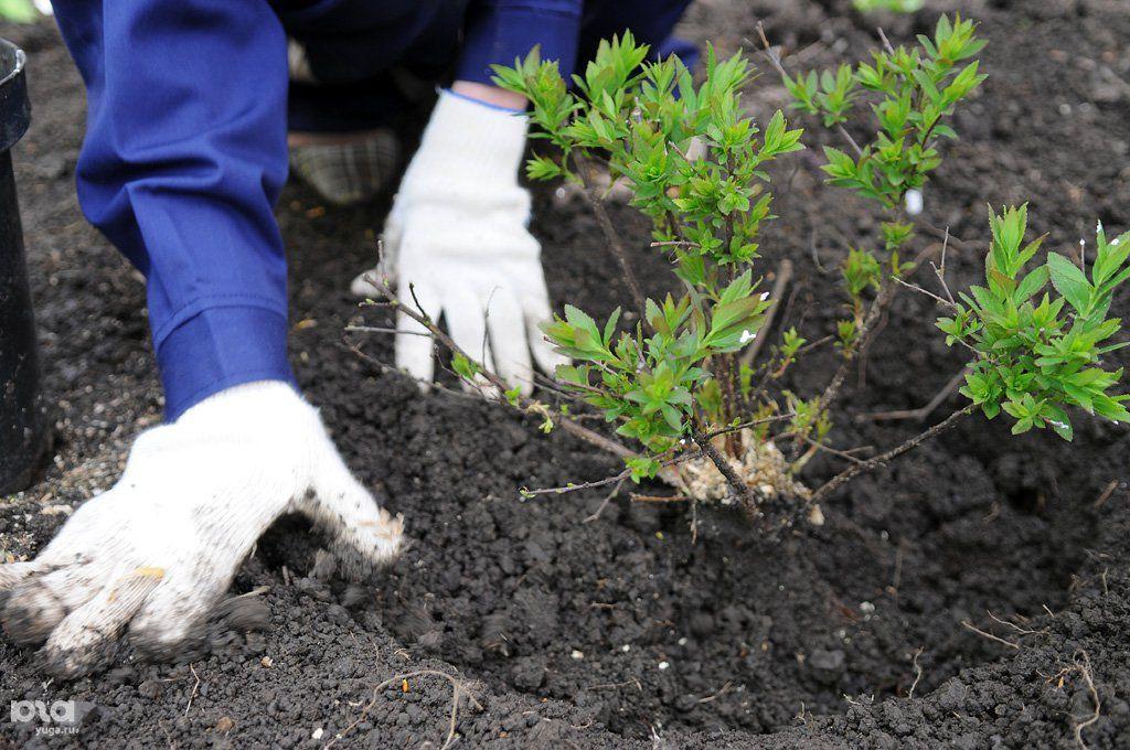 Краснодарский край стал победителем экологического проекта «Зеленая Россия»