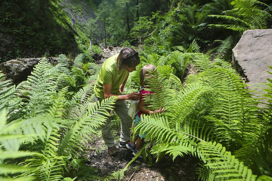 В Сочи дети смогут изучать флору и фауну в горной академии