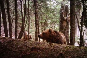©Фото Юрия Спасовского, пресс-служба Кавказского биосферного заповедника