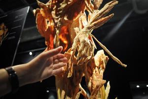 """Анатомическая выставка """"Части тела"""" в Краснодаре ©Фото Елены Синеок, Юга.ру"""