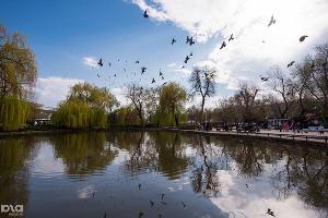 Пруд в парке «Городской сад» в Краснодаре ©Фото Елены Синеок, Юга.ру