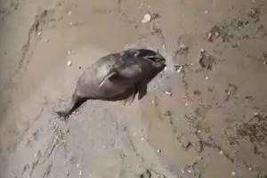 Мертвая рыба на берегу Азовского моря близ Шиловки ©Скриншот видео, предоставленного очевидцами