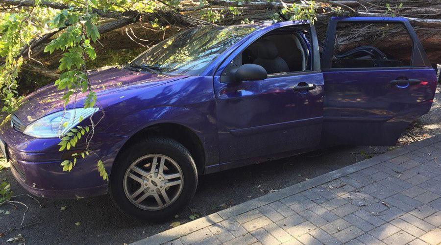 ВСочи наавтомобили слюдьми игазопровод ветер повалил деревья
