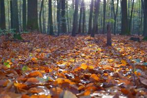 ©Фото с сайта pxhere.com