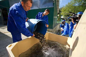 В Сочи в реку Мзымту выпустили мальков черноморского лосося ©Дмитрий Меркушев