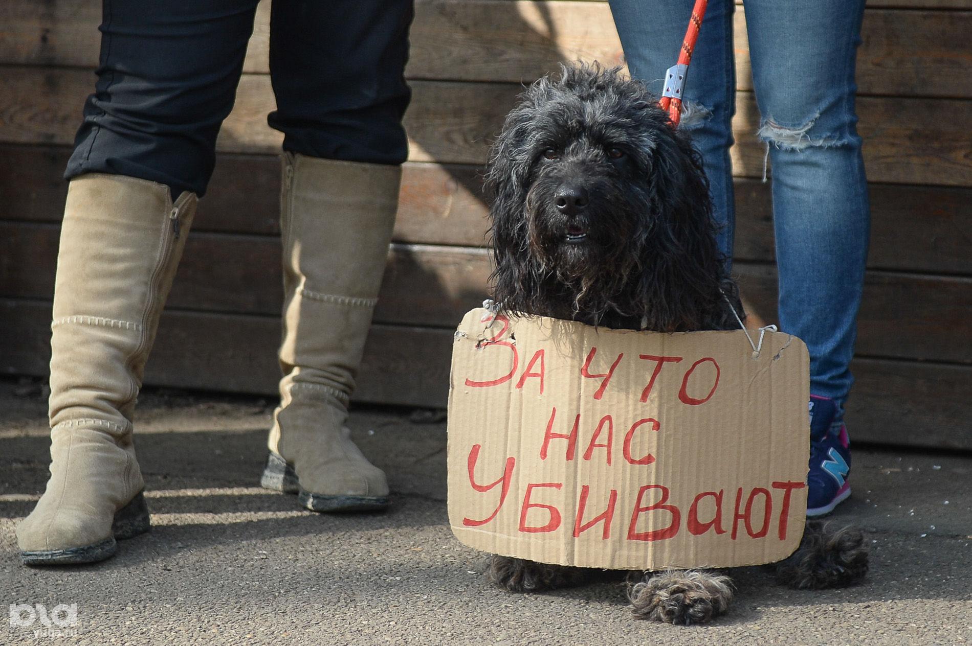 Пикет в защиту бездомных животных в Краснодаре ©Фото Юга.ру