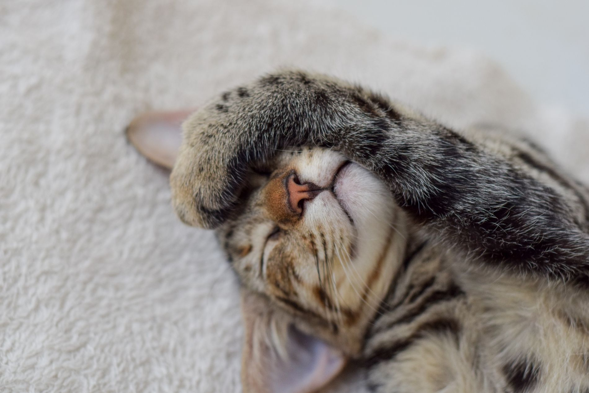 Ложный вызов: Пьяные вСеверной Осетии вызвали скорую помощь котенку