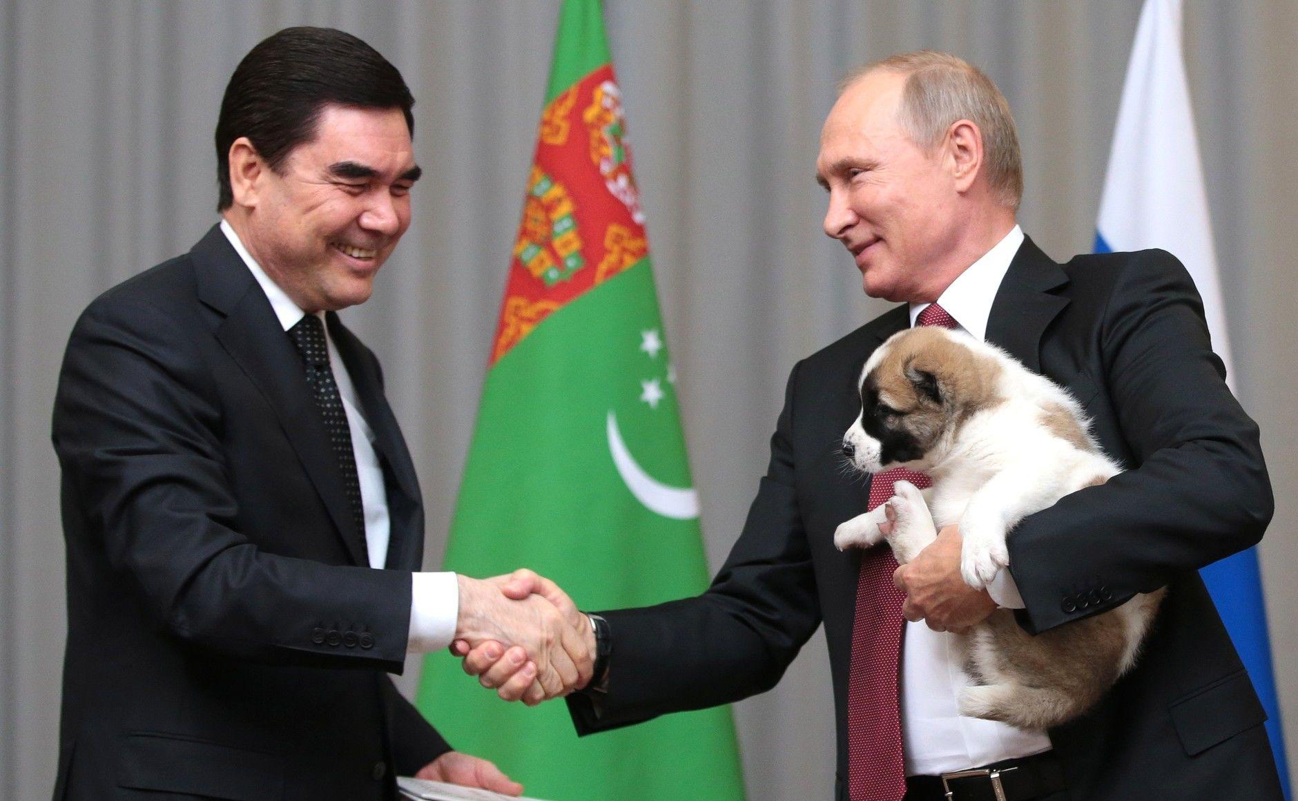 Президент Туркменистана подарил Владимиру Путину щенка алабая по кличке Верный ©Фото с сайта commons.wikimedia.org