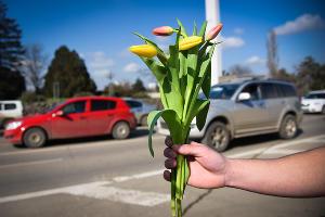 """Акция """"Цветочный патруль"""" в Краснодаре  ©Фото Елены Синеок, Юга.ру"""