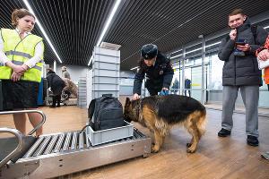Кинолог проверяет багаж на наличие взрывчатых веществ в аэропорту Краснодара ©Фото Елены Синеок, Юга.ру