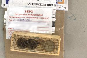 ©Фото пресс-службы «Почты России»