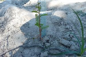 ©Фото пресс-службы министерства природных ресурсов Краснодарского Края