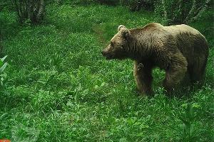 ©Фото пресс-службы Кавказского биосферного заповедника