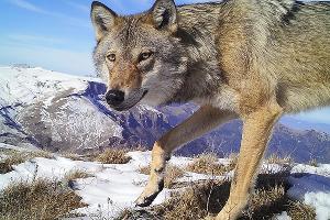 ©Фото предоставлено пресс-службой Кавказского биосферного заповедника