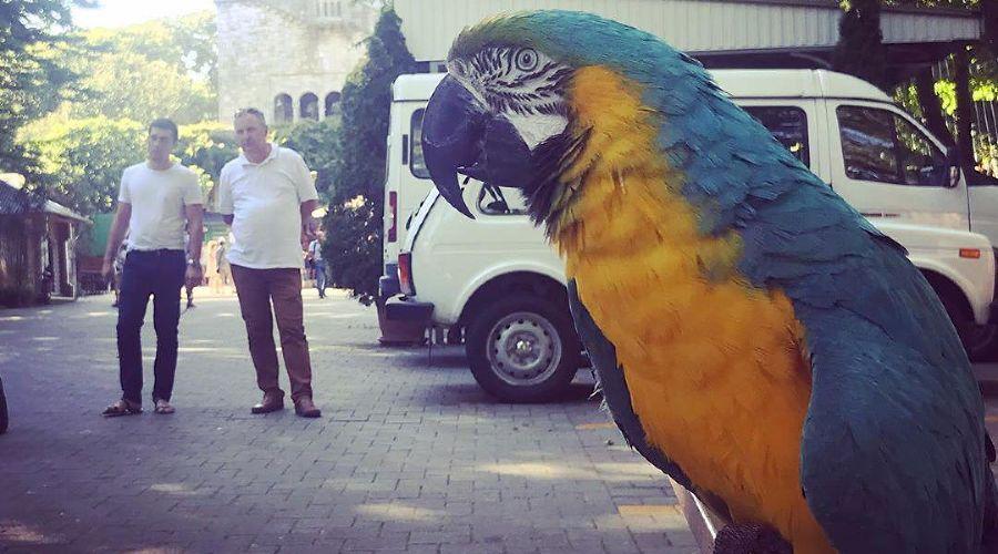 ©Фото со страницы instagram.com/ecology.sochi