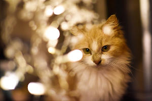 Стеснительная кошечка Линда ©Елена Синеок, Юга.ру