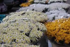 Цветочная ярмарка в Краснодаре ©Фото пресс-службы администрации Краснодара