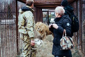 """Парк львов """"Тайган"""" в Крыму  ©Денис Яковлев, ЮГА.ру"""