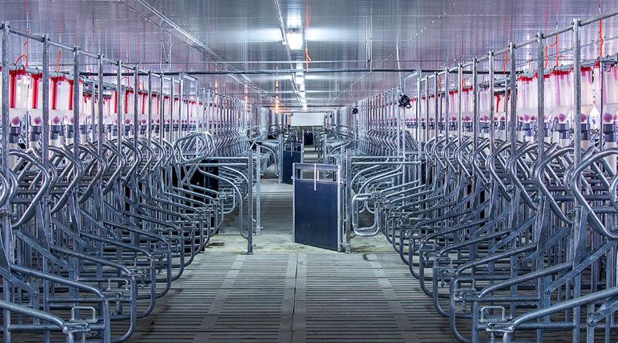 Свинотоварный комплекс ©Фото с сайта ahkuban.ru