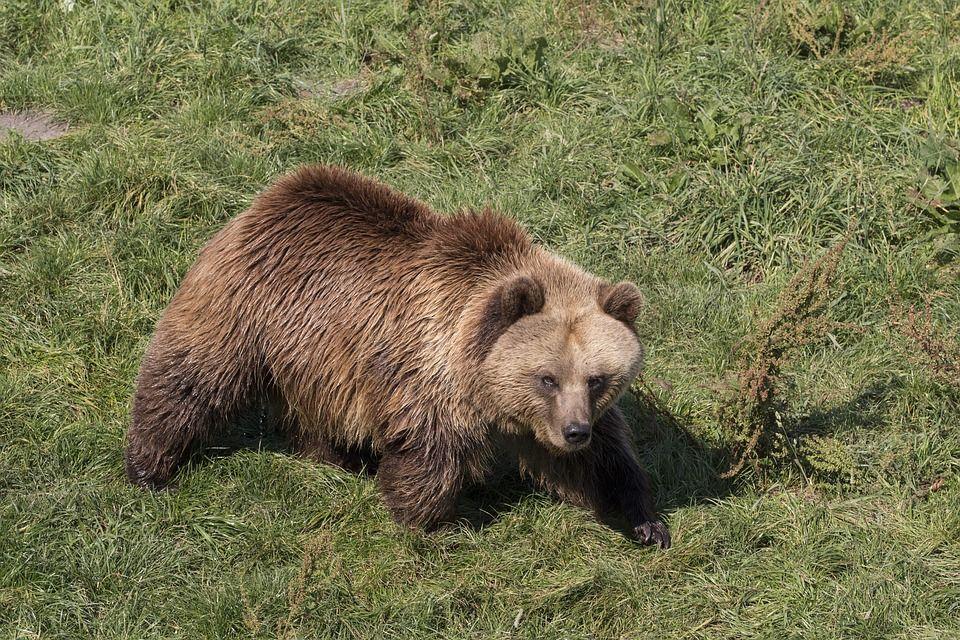 ВСочи медведь напал на77-летнюю женщину
