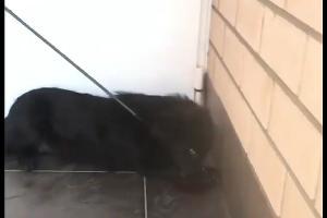 ©Скриншот из видео