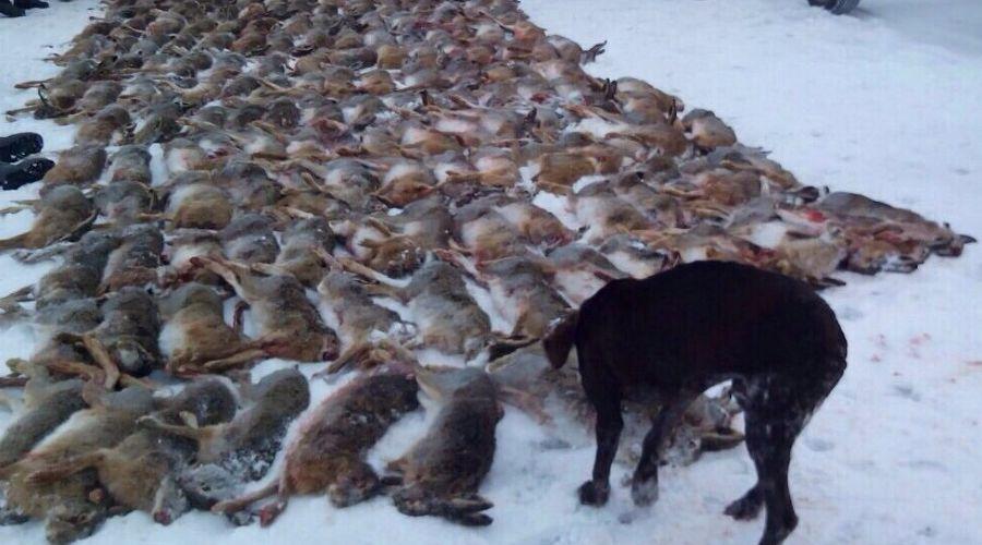 Незаконный отстрел зайцев  ©Фото Юга.ру
