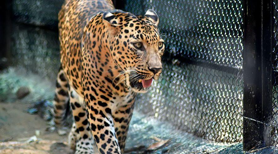 ©Фото Kachi Awaji с сайта Unsplash.com