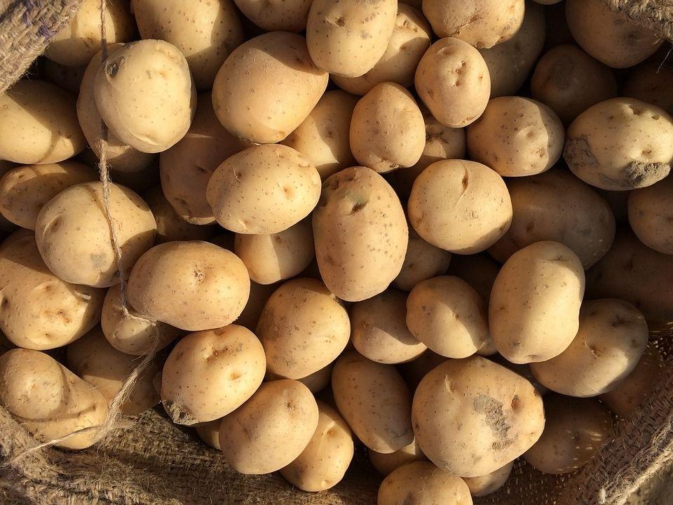 Железный забор ицентнер картофеля украли удачников граждане Невинномысска