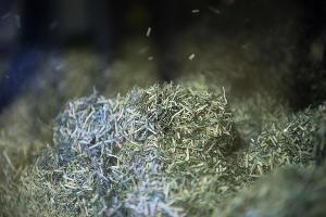 Утилизация банкнот ©Фото Елены Синеок, Юга.ру