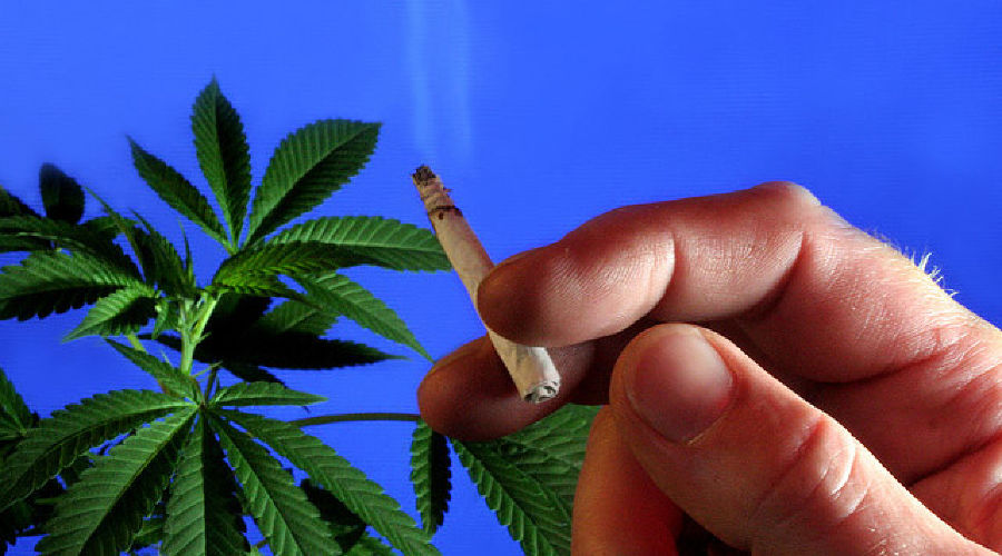 наркотики марихуана ©Фото Юга.ру