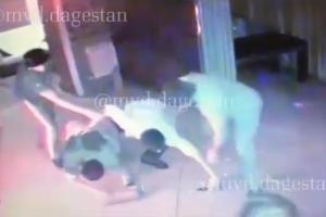 ©Скриншот видео МВД по Дагестану