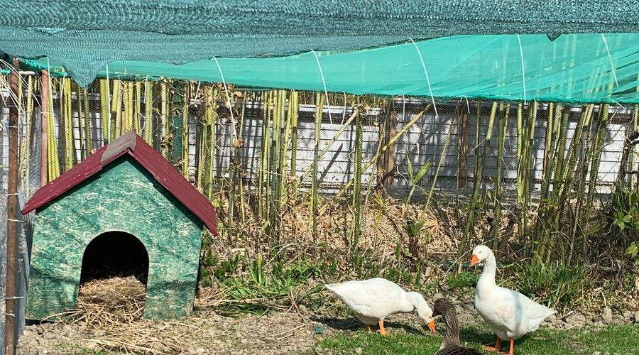 Лебеди ©Фото Оксаны Тимченко, пресс-служба Кавказского заповедника
