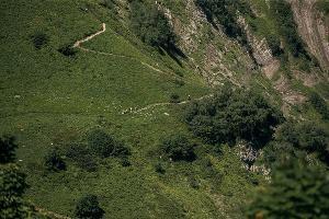 Черничная тропа ©Фото пресс-службы «Курорта Красная Поляна»