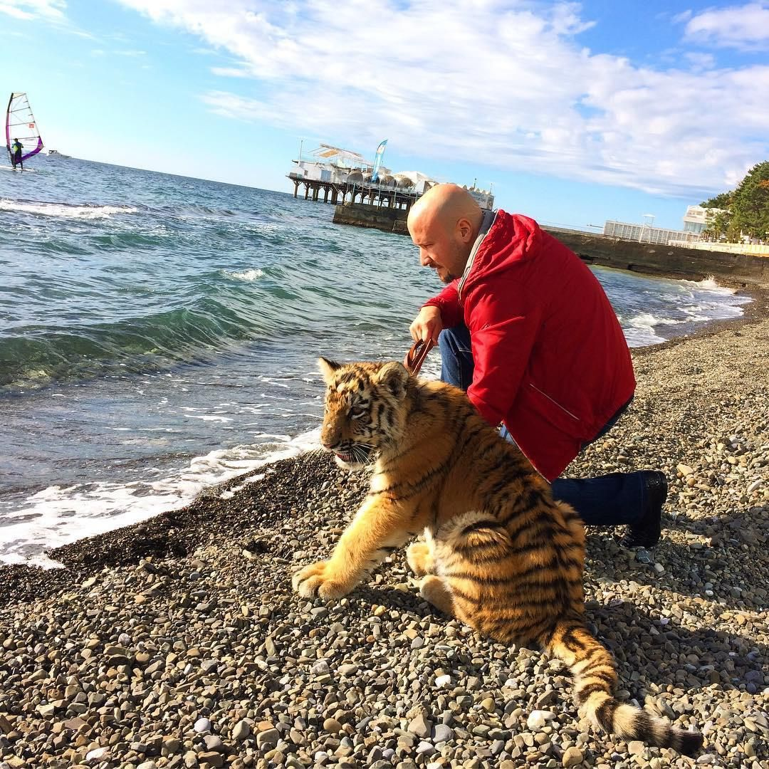 Нанабережной вСочи потерялся четырехмесячный тигренок Шива